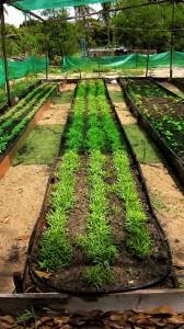 1 HS Organic Garden 1