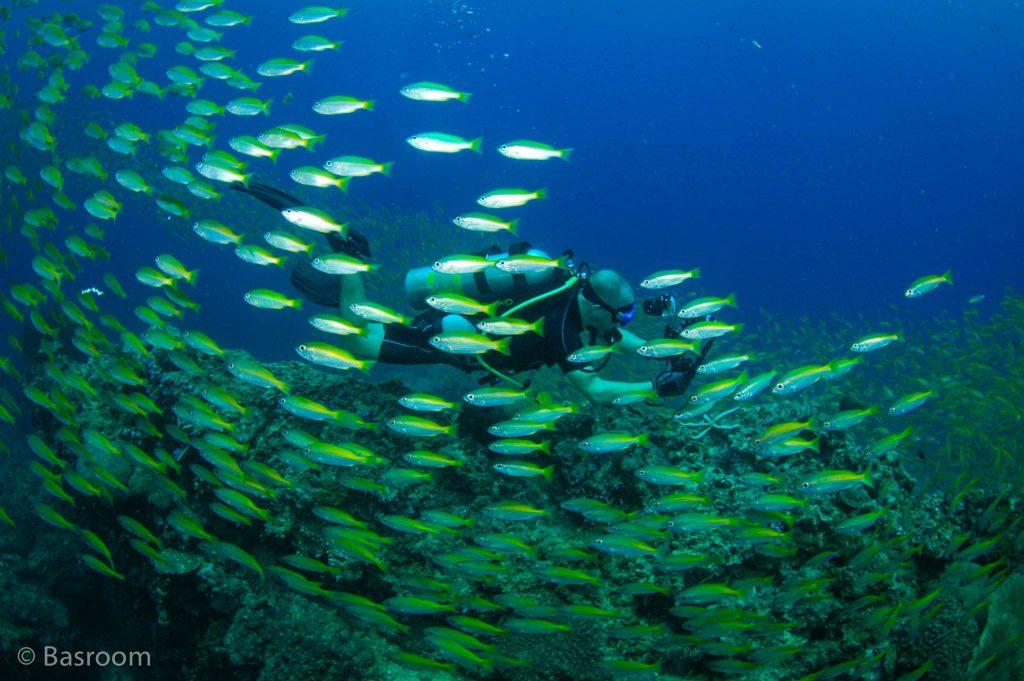 Scuba Diving in Koh Similan
